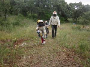 apicultura 14